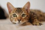Lipari, gatti abbandonati per le strade: adesso vivono in un rifugio dell'Enpa