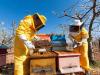 Giornata Terra: WWF, salviamo impollinatori dai pesticidi
