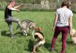 Addestratore prende a calci un cane: «So sempre dove toccarti, ricordatelo», il video Le immagini girate in un centro di addestramento a Massa Marittima, in Toscana - Corriere Tv