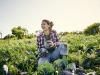 Alimentare: Carrefour,cresce il Firmato Da Agricoltori(Fdai)