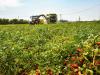 Agricoltura: assegnati 115 milioni di euro, martedì le graduatorie