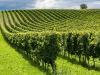 Cultura finanziaria determinante per le imprese agricole