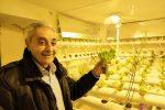 La coltivazione idroponica sbarca ad Enna, il progetto di un geometra in pensione