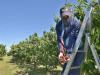 In agricoltura 18.000 stagionali in meno nel 2020