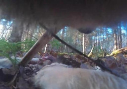 La vita segreta del lupo svelata (per la prima volta) da una mini telecamera La vita dei lupi, dal punto di vista dei lupi: il progetto nel parco nazionale dei Voyageurs, in Minnesota, Usa - CorriereTV