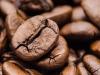 Nasce la Slow Food Coffee coalition