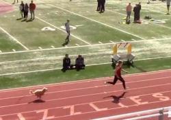 Veloce come Bolt: il cagnolino scappa dai padroni e vince la gara 4x200 È accaduto nello Utah, Stati Uniti, alla corsa di atletica della scuola - CorriereTV