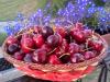 Prezzi: Confagri, giù frutta ma è tracollo allorigine -30%