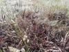 Invasione di cavallette in Sardegna, danni ingenti