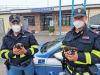 Cuccioli di poche settimane sullA1, salvati dalla Polstrada