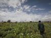Covid e guerre, la fame colpisce 155 milioni di persone. Record in 5 anni