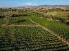 Vino: nasce il portale turistico visitmorellino.com