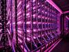 Un foto-bioreattore modulare per la produzione delle alghe clorella e spirulina (fonte: Vaxa, Islandia)