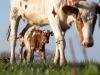 Cia, in anno Covid export biologico made in Italy +8%
