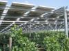 Rinnovabili: EF Solare, servono regole chiare e tempi brevi