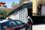 Cavalli dopati in una stalla abusiva a Catania, denunciato un 50enne