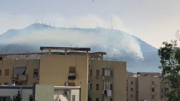incendi, monte Bonifato, monte pellegrino, Palermo, Trapani, Cronaca