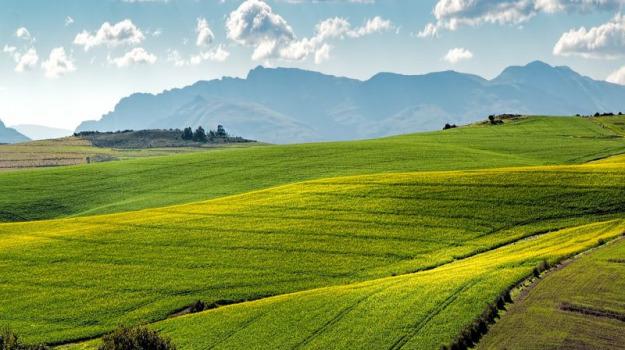 AGRICOLTURA, Sicilia, Economia