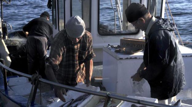 pesca, Trapani, Politica