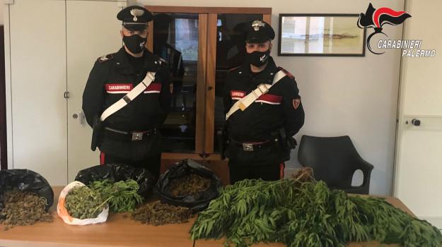 droga, partinico, reddito di cittadinanza, Palermo, Cronaca