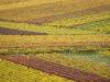 Vino: Unicredit, ritorno a volumi pre Covid nel 2022