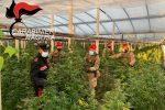 Camion con piante di marijuana a Vittoria incuriosisce gente: ma è un carico sequestrato