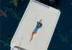Maldive: relax sullo yacht in mezzo agli squali Il filmato dal drone sopra le acque al largo di Maafushi - Dalla Rete