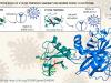 Nuove prospettive per combattere l'infezione grave da Sars-Cov-2