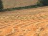 Agricoltura: riforma Pac, primo accordo sulle misure verdi