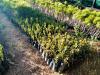 E verde mania, 7 italiani su 10 a caccia di piante in vivai