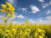 AssoBio-Ismea, nuovo polo di informazioni sul biologico