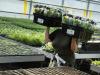 Industria insalate pronte chiede moderne norme IV Gamma