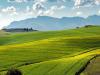 Accordo Mipaaf-Plasmon per filiera 100% made in Italy