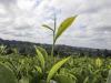 Lincei al Senato, grave errore su agricoltura biodinamica