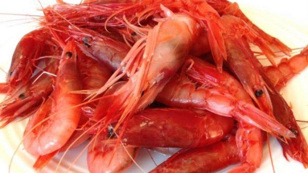Il ministero blocca la pesca del Gambero rosso, scoppia la protesta a Mazara del Vallo