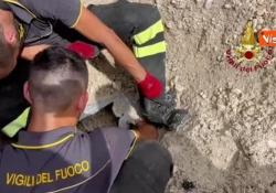 Gatto incastrato nel tubo di scarico di un tombino, salvato dai Vigili del fuoco Per liberarlo è stato necessario l'uso di uno scavatore - Agenzia Vista/Alexander Jakhnagiev