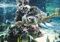 Giornata mondiale degli oceani, i pesci (con le voci dei vip) contro il riscaldamento globale Il video «Profondo bianco» che dà voce alle creature della barriera corallina dell'Acquario di Genova - CorriereTV