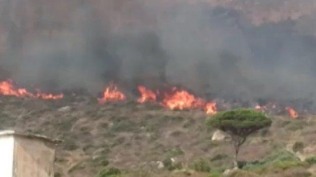 incendi, Selinunte, Trapani, Cronaca