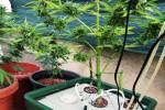 Produce marijuana in una serra in balcone, 31enne arrestato a Caltanissetta