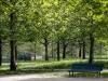 alberi e verde urbano