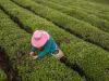 Ismea, più donne in agricoltura con lestensione delle agevolazioni