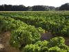 Agroalimentare sostenibile, tavolo Atenei, Crea e Fairtrade
