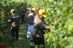 Truffe all'Inps con falsi braccianti agricoli, 65 condanne a Caltanissetta