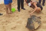 Avola, tartaruga marina tenta di tornare in mare ma si blocca: soccorsa dai carabinieri
