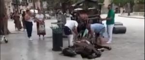 Morto a Palermo un altro cavallo che trainava una carrozza: secondo caso in tre giorni