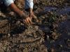 Pre-summit Fao: Afa, agricoltori al centro del sistema