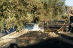 Azienda agricola distrutta da un incendio a Paternò, non è la prima volta: indagini in corso