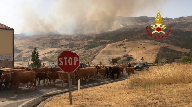 incendi, regione siciliana, Sicilia, Economia