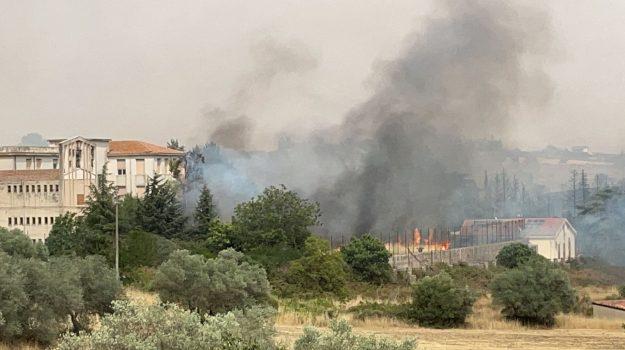 incendi, pergusa, Enna, Cronaca