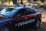 Modica, furto di carrube: due rumeni arrestati per la seconda volta